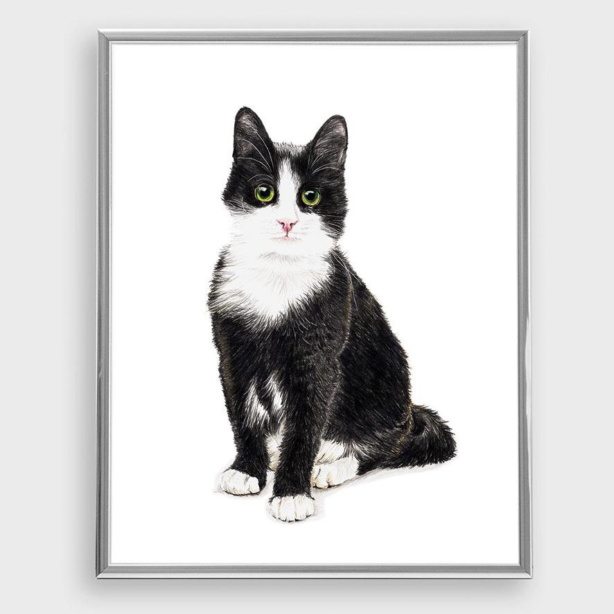 Katze 01, Poster, Kunstdruck, A4 - 1