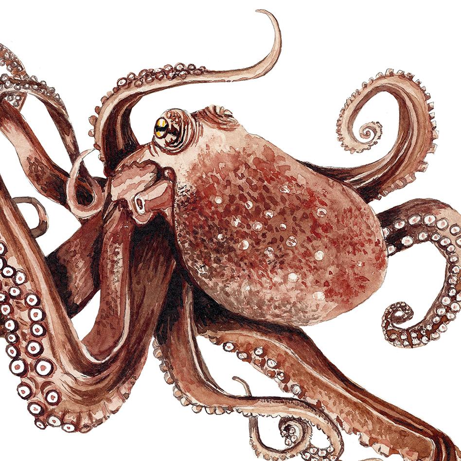 Oktopus Poster Kunstdruck Zeichnung Meerestier 2