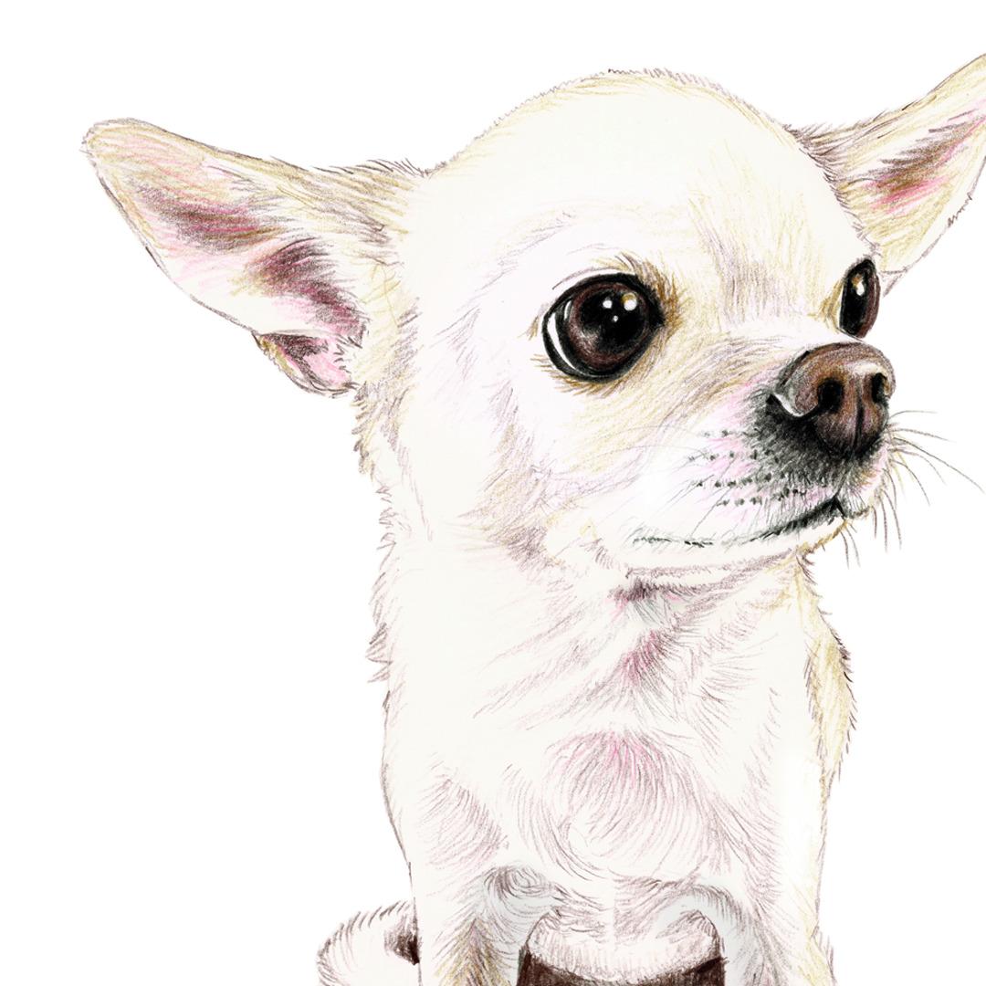 Chihuahua Zeichnung Poster Kunstdruck A4