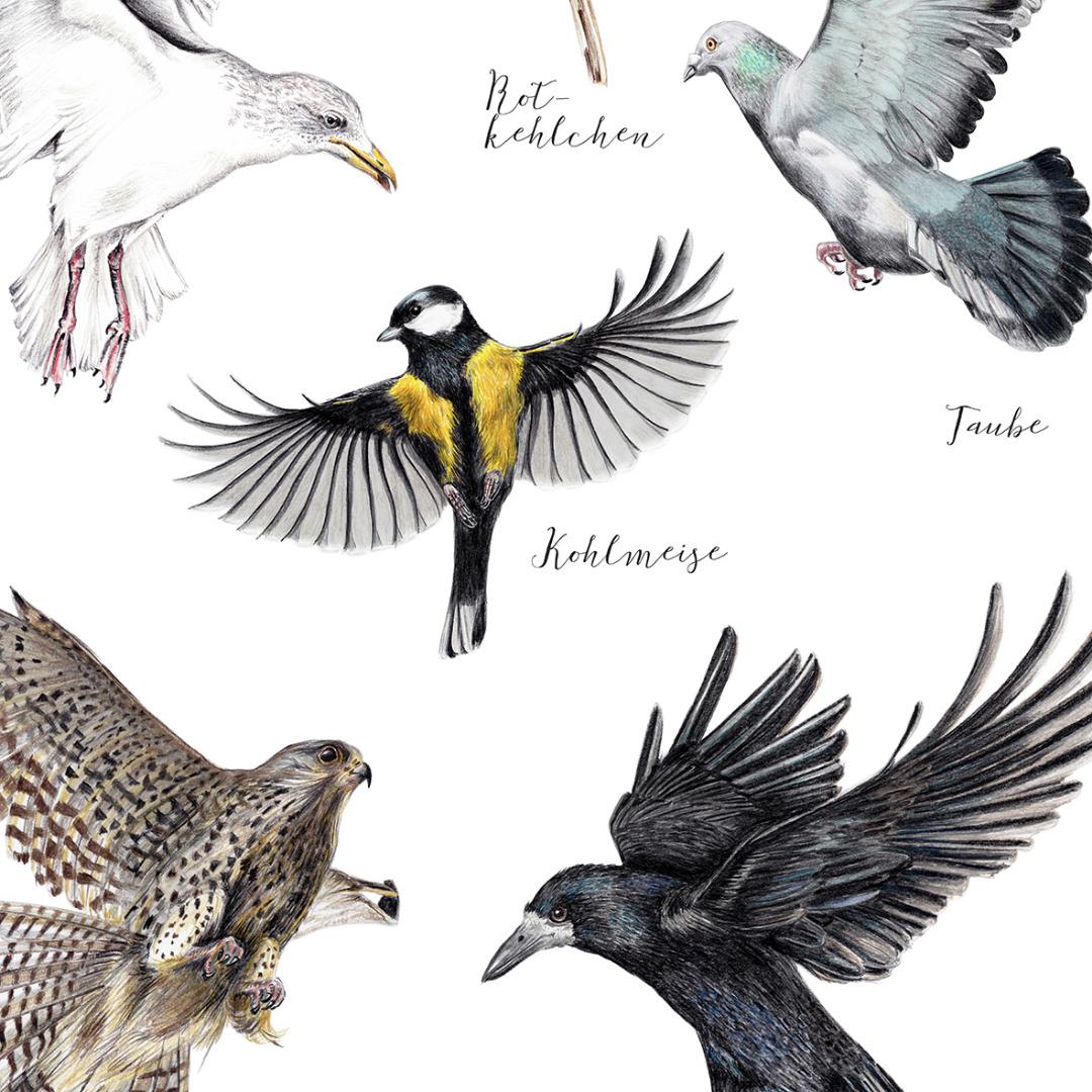 Poster heimische Vögel im Flug, Janine Sommer, 8 Vögel, Vogelposter, Kunstdruck, Art Print, Vogelzeichnungen - 2