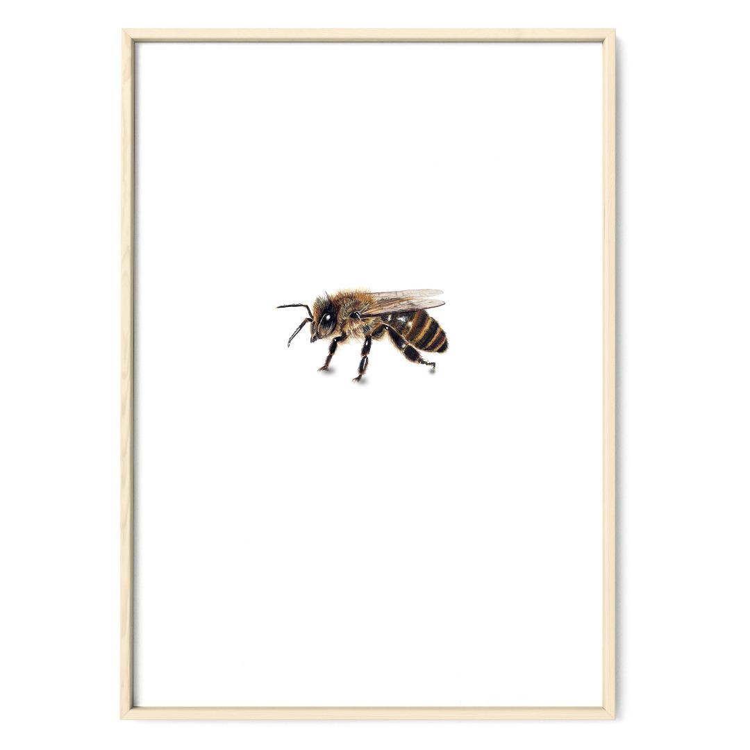 Biene 02 Poster Kunstruck Zeichnung