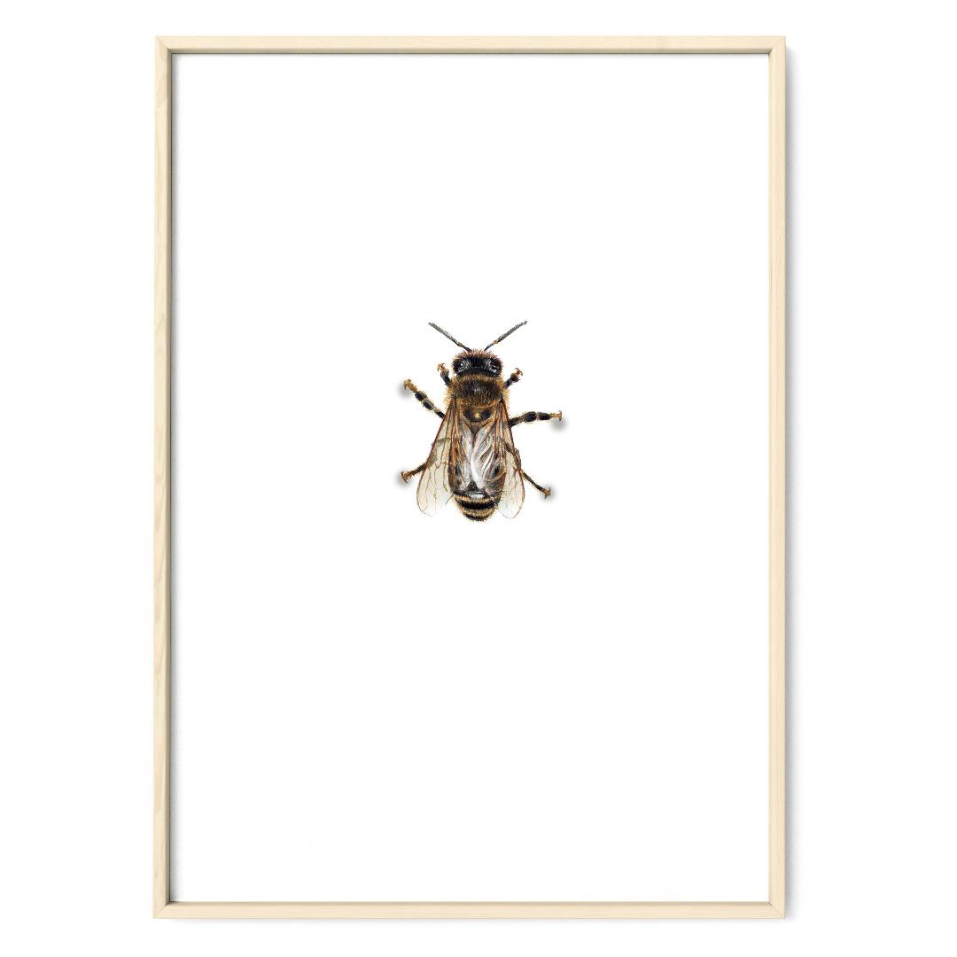 Biene 01 Poster Kunstruck DIN A4
