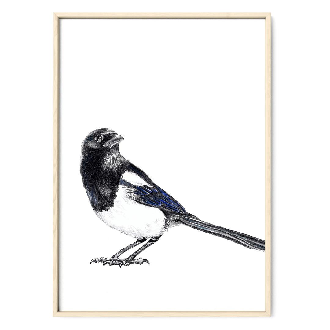 Elster Vogel Poster Kunstdruck
