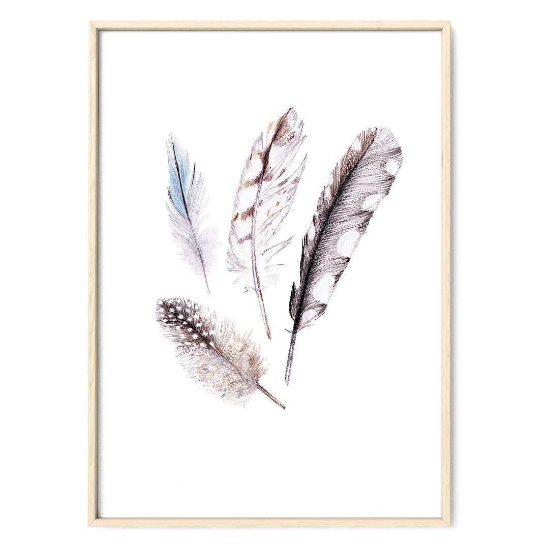 Zeichnung Federn, Poster, Kunstdruck, A4