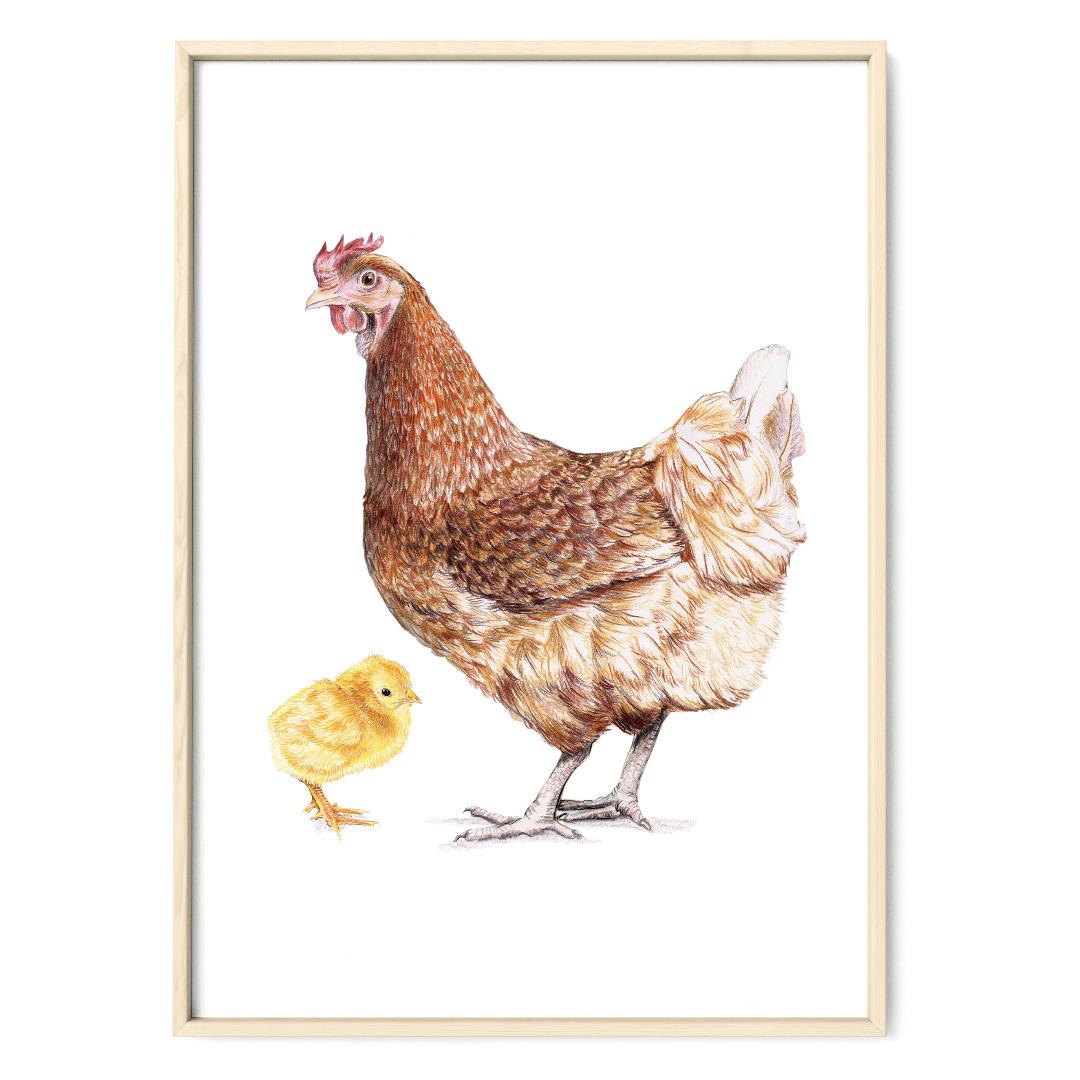 braunes Huhn mit Küken, Poster, Kunstdruck, Art Print Hühnezeichnung Huhn gezeichnet Tierbilder - 1
