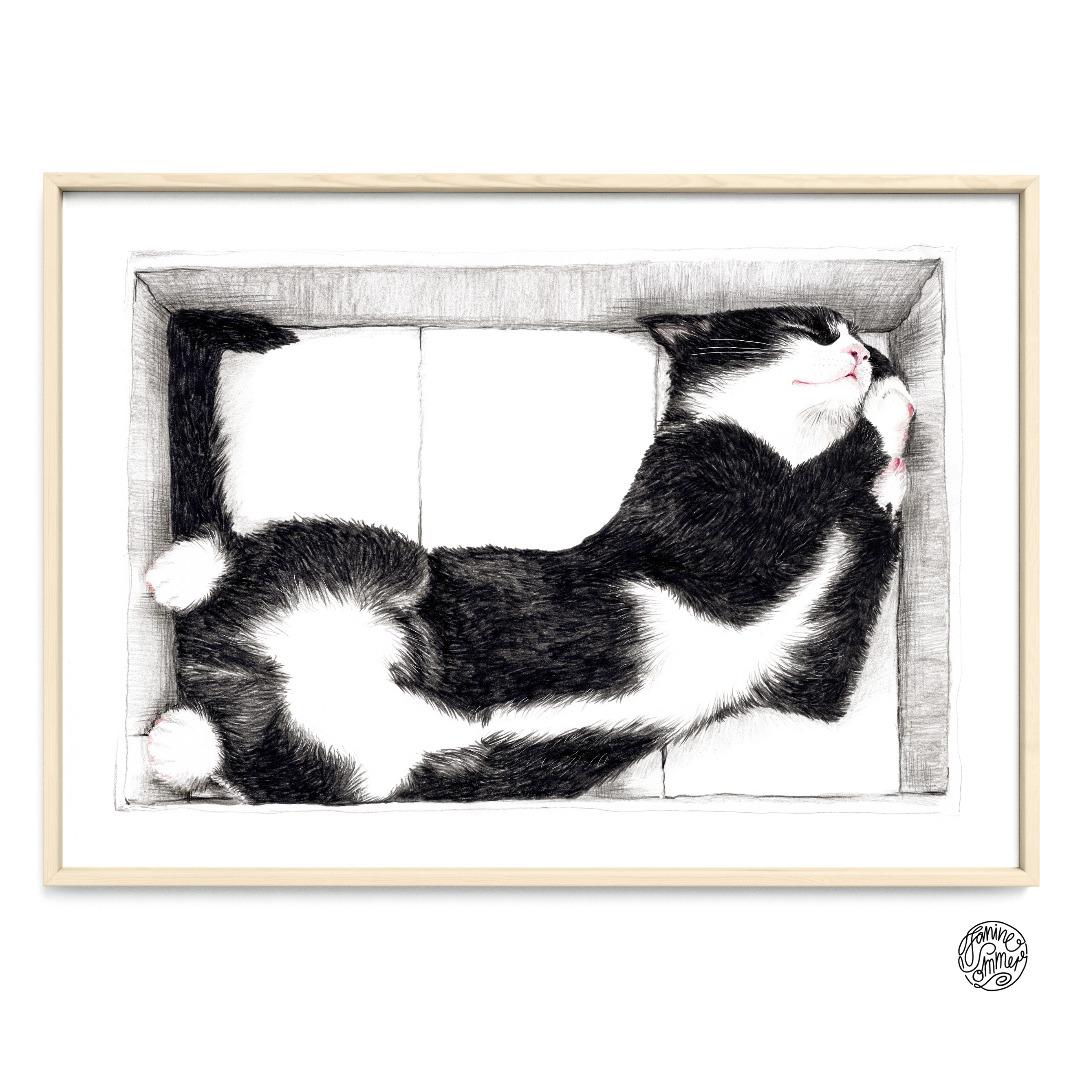 Katze im Karton Poster Kunstdruck Zeichnung