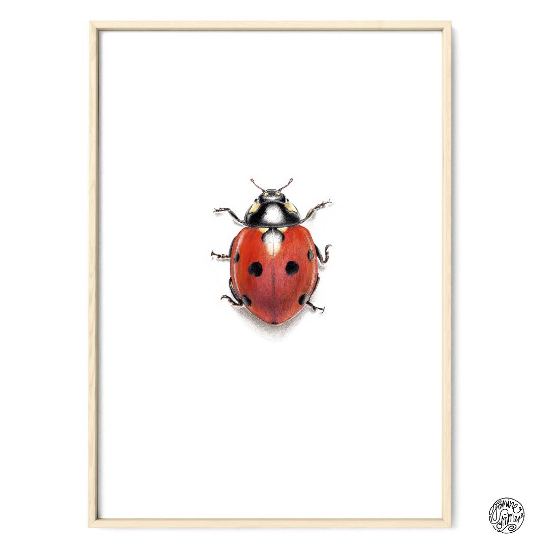 Marienkäfer Poster Kunstdruck Zeichnung 5