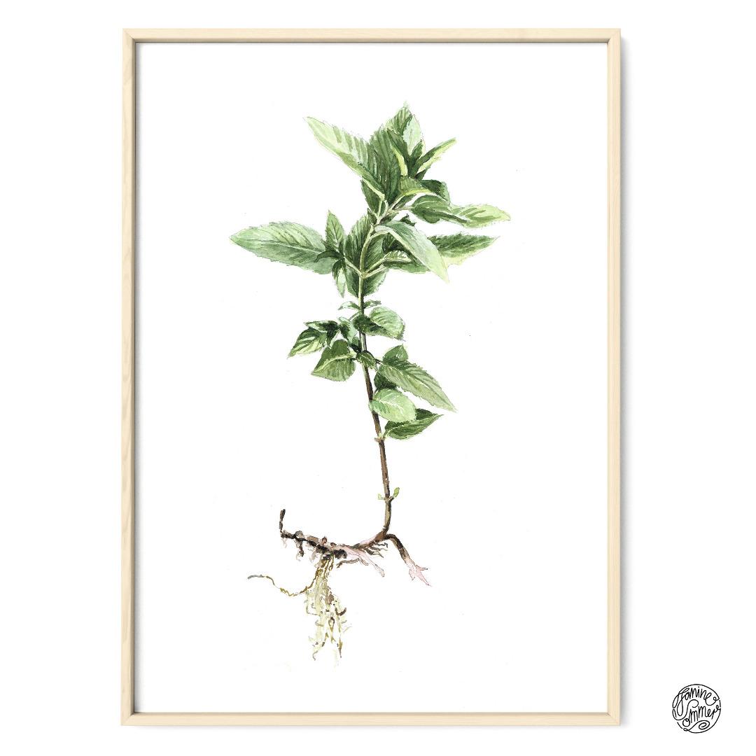 Minze Poster Kunstdruck Pflanzen Zeichnung