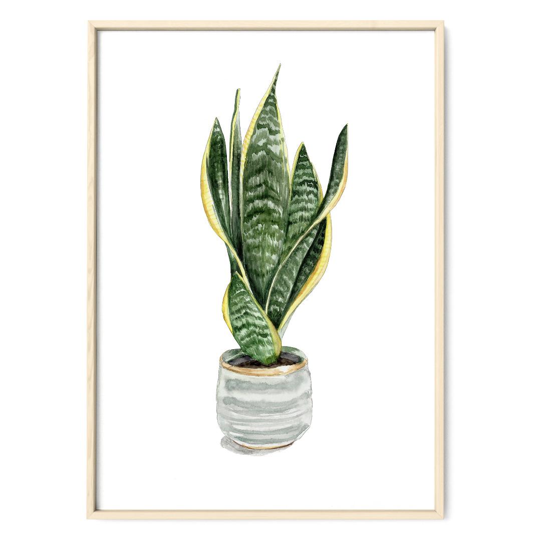 Sanseveria, Bogenhanf, Poster, Kunstdruck, Pflanzenposter, Pflanzenzeichnung, Pflanzen Aquarell - 1