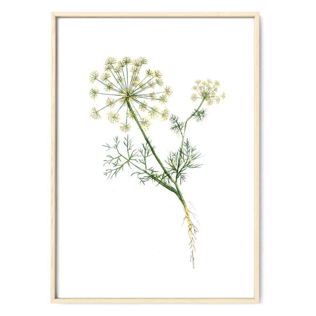 Dill Poster Kunstdruck Pflanzen Zeichnung