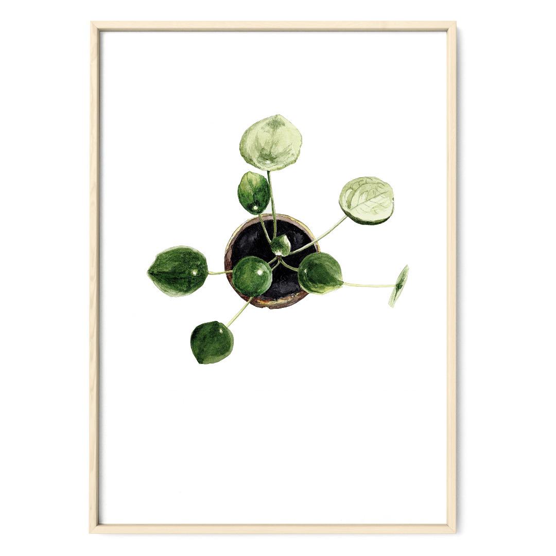 Pilea 01, Poster, Kunstdruck, Pflanzenposter, Pflanzenzeichnung, Pflanzen Aquarell - 1
