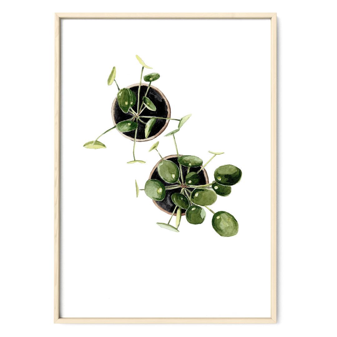 Pilea 02, Poster, Kunstdruck, Pflanzenposter, Pflanzenzeichnung, Pflanzen Aquarell - 1