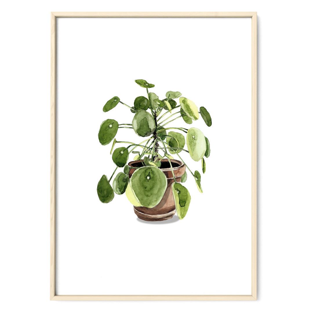 Pilea 03, Poster, Kunstdruck, Pflanzenposter, Pflanzenzeichnung, Pflanzen Aquarell - 1