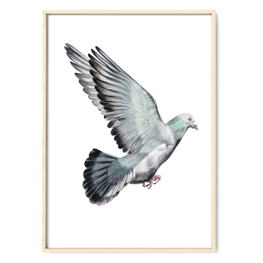Taube Poster Kunstdruck