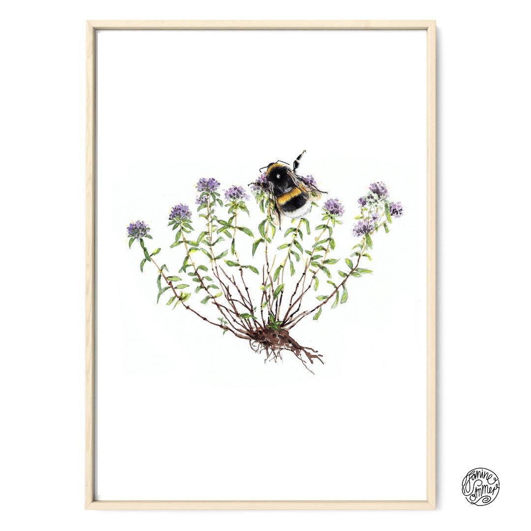 Thymian mit Hummel Poster Kunstdruck Pflanzen