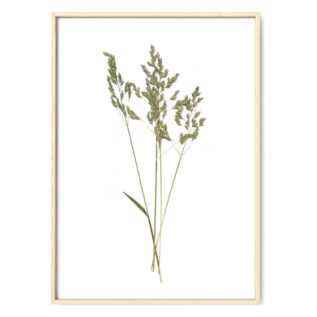 Gräser Poster Kunstruck DIN A4