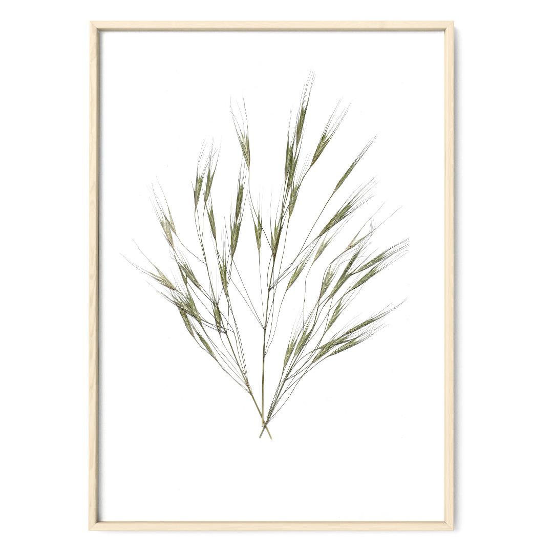 Gräser 02 Poster Kunstruck DIN A4