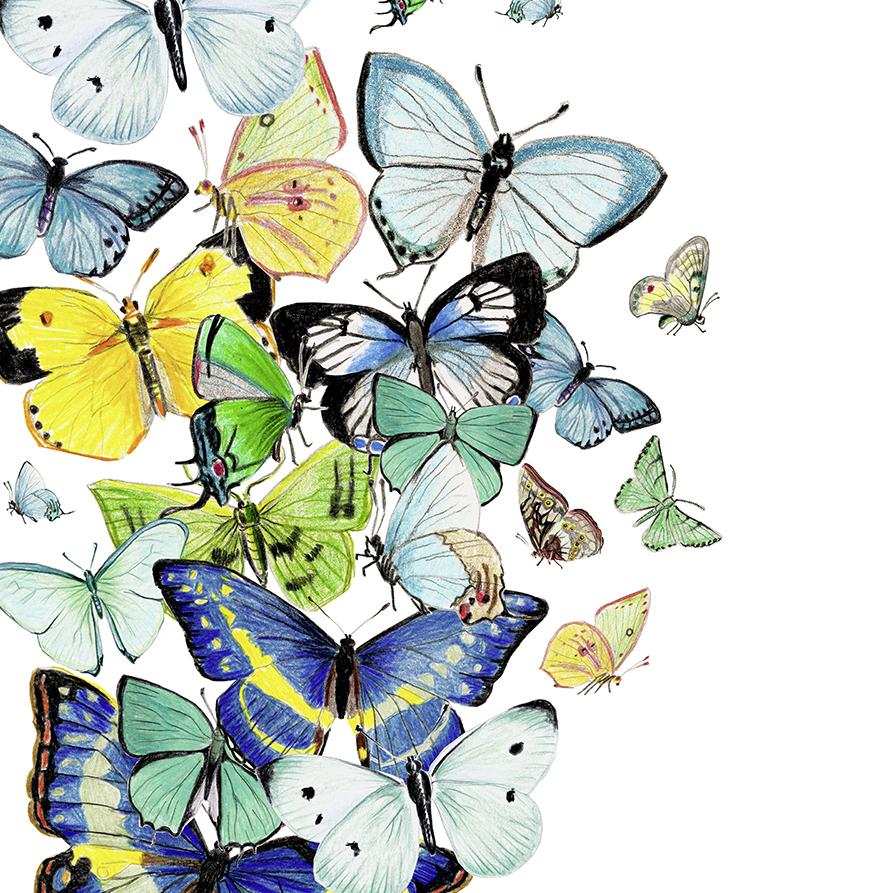 Zeichnung Schmetterlinge, Poster, Kunstdruck, blau-grün