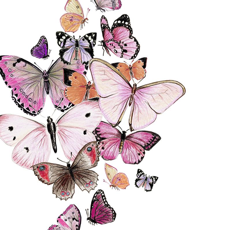 Schmetterlinge rosa Poster Kunstdruck Zeichnung 2