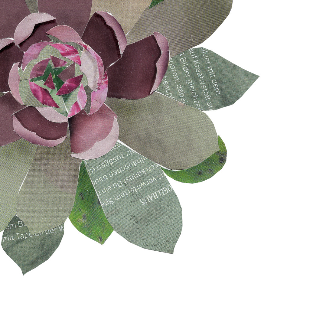Collage Sukkulente Kunstdruck Pflanzenposter