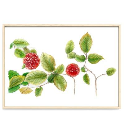 Fliegenpilze und Herbstlaub Poster Kunstdruck Pflanzen
