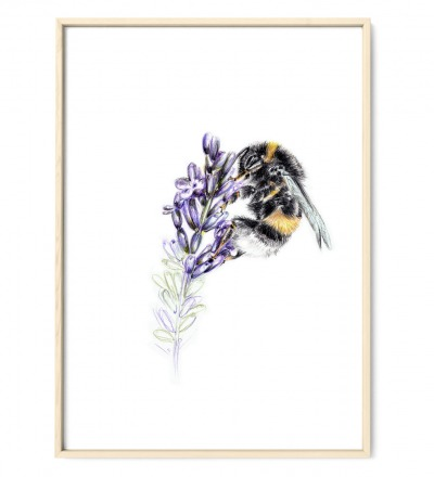 Hummel am Lavendel Poster Kunstdruck Art