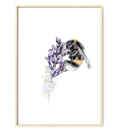 Hummel am Lavendel, Poster, Kunstdruck, Art Print