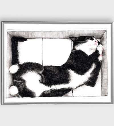 Katze im Karton Zeichnung Poster Kunstdruck A4 - Art Print A4/ Kunstdruck / Katzenzeichnung