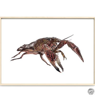 Hummer Poster Kunstdruck Zeichnung Meerestier Aquarell-Buntstiftzeichnung