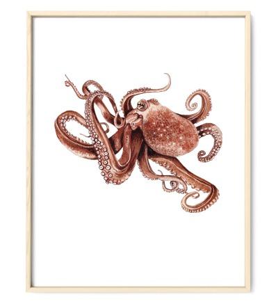 Octopus, Poster, Kunstdruck, Tierposter