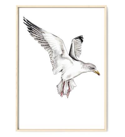Möwe Poster Kunstdruck - Buntstiftzeichnung Reproduktion