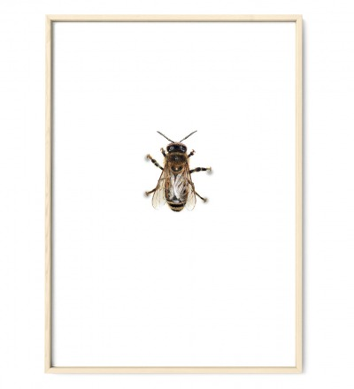 Biene 01 Poster Kunstdruck Art Print