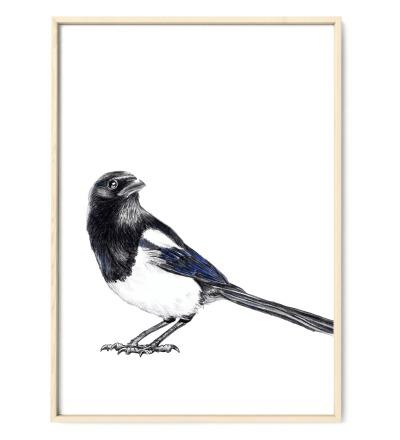 Elster Vogel Poster Kunstdruck Buntstiftzeichnung Reproduktion