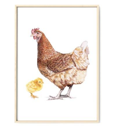 braunes Huhn mit Küken Poster Kunstruck
