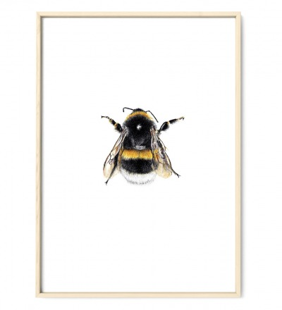 Hummel 01, Poster, Kunstdruck, Art Print