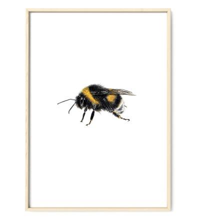 Hummel Poster Kunstdruck DIN A4 Buntstiftzeichnung