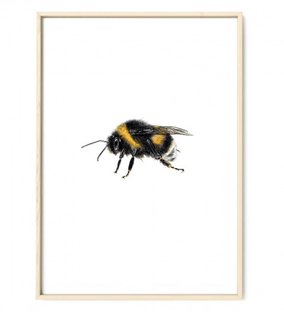 Hummel Poster Kunstdruck Zeichnung Buntstiftzeichnung Reproduktion