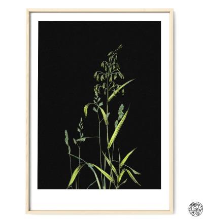 Gräser auf Schwarz Poster Kunstdruck Pflanzen