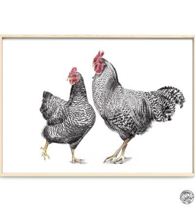 Amrocks Hahn und Henne Poster Kunstdruck