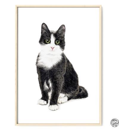 Katze Murmelauge Poster Kunstdruck Zeichnung Buntstiftzeichnung