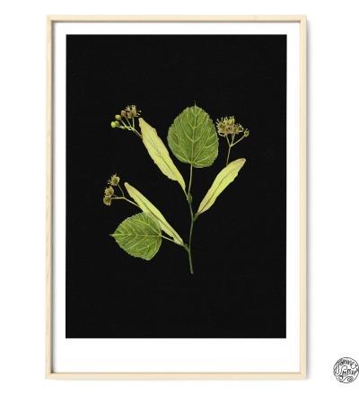 Linde auf Schwarz Poster Kunstdruck Pflanzen