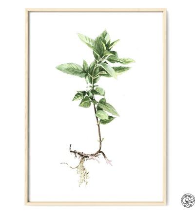 Minze Poster Kunstdruck Pflanzen Zeichnung Aquarell
