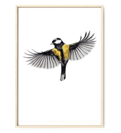 Kohlmeise im Flug, Zeichnung Poster Kunstdruck A4 - Art Print A4 / Kunstdruck