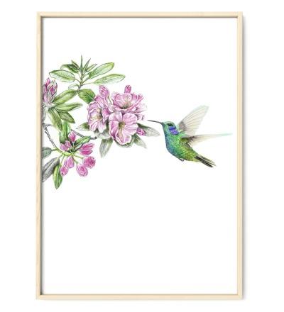 Kolibri Poster Kunstdruck - Buntstiftzeichnung Reproduktion