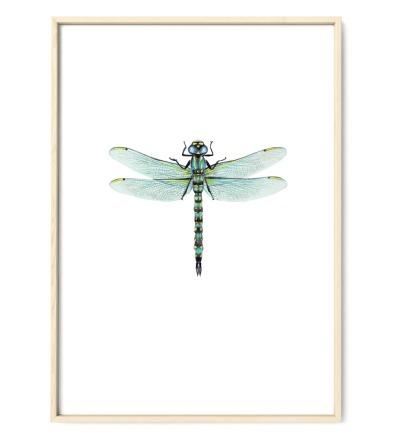 Zeichnung Libelle Poster Kunstdruck gelb-grün