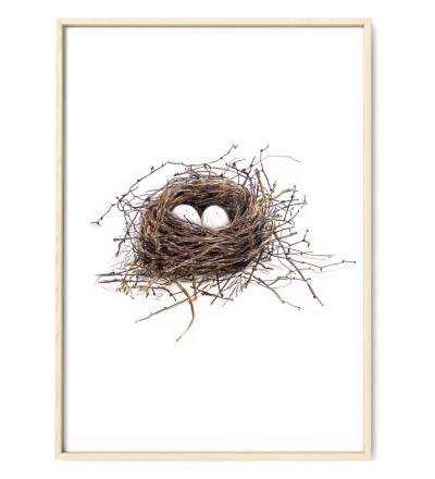 Vogelnest Poster Kunstdruck - Buntstiftzeichnung Reproduktion