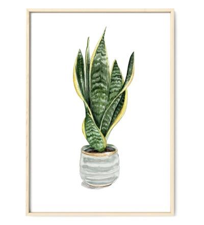 Sanseveria, Bogenhanf, Poster, Kunstdruck, Pflanzenposter, Pflanzenzeichnung, Pflanzen Aquarell - Pflanzen Aquarell