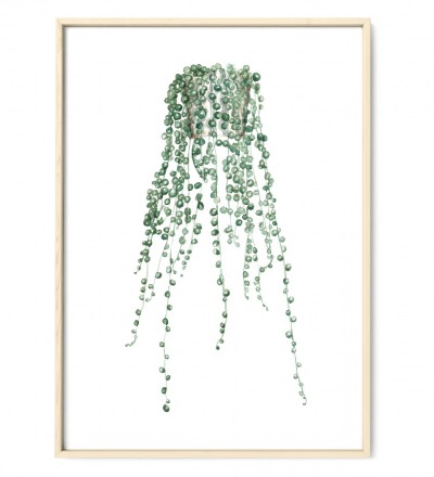 Erbsenpflanze Poster Kunstdruck Pflanzen Zeichnung Aquarell