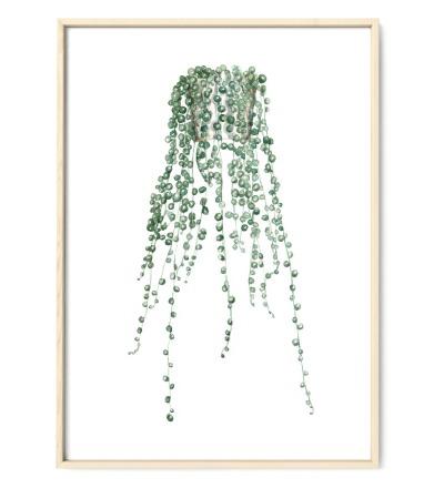 Erbsenpflanze Poster Kunstdruck DIN A4 Aquarell