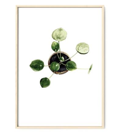 Pilea 01, Poster, Kunstdruck, Pflanzenposter, Pflanzenzeichnung, Pflanzen Aquarell - Pflanzen Aquarell, Pilea